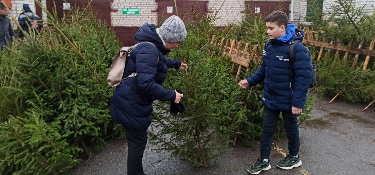 Как продают елки в Барановичах. Фотофакт