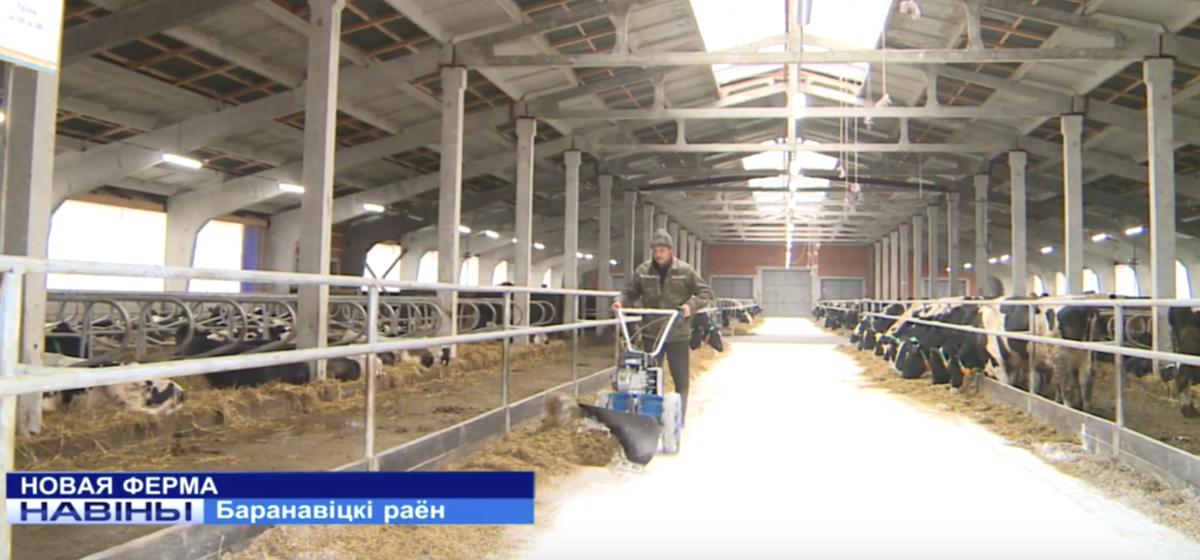 Новая молочная ферма открылась в Барановичском районе. Видеофакт