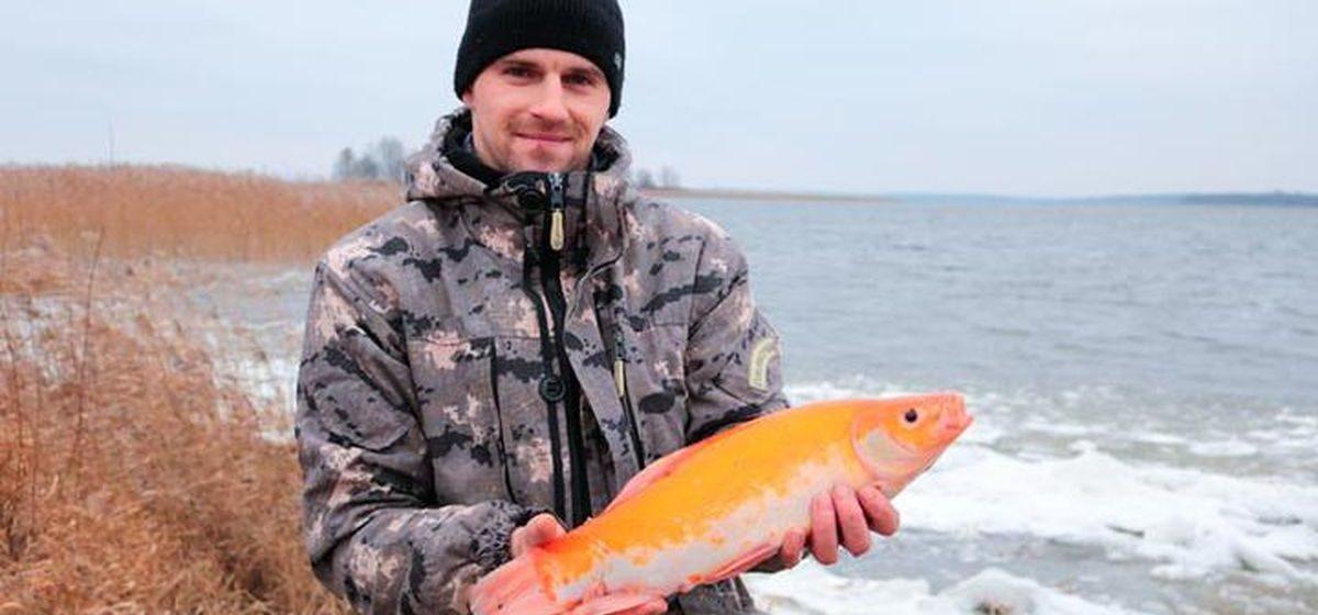 Рыбак в Браславском районе поймал необычную золотую рыбу. Фото