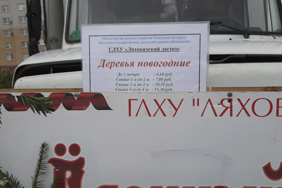 Фото: Елена ЕВСЕВИЦКАЯ