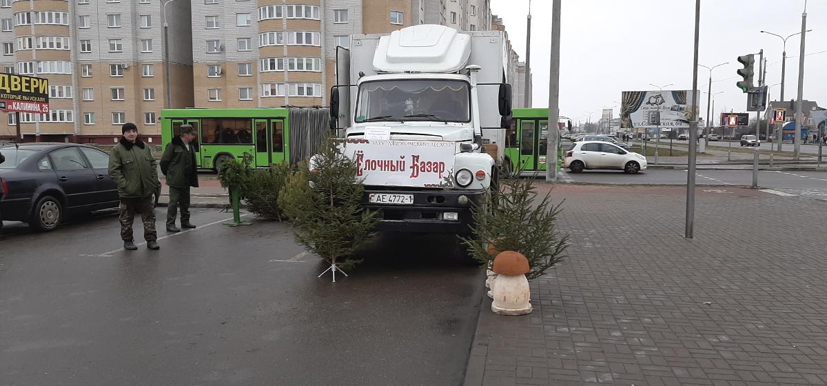 В Боровках открылся елочный базар. Фотофакт