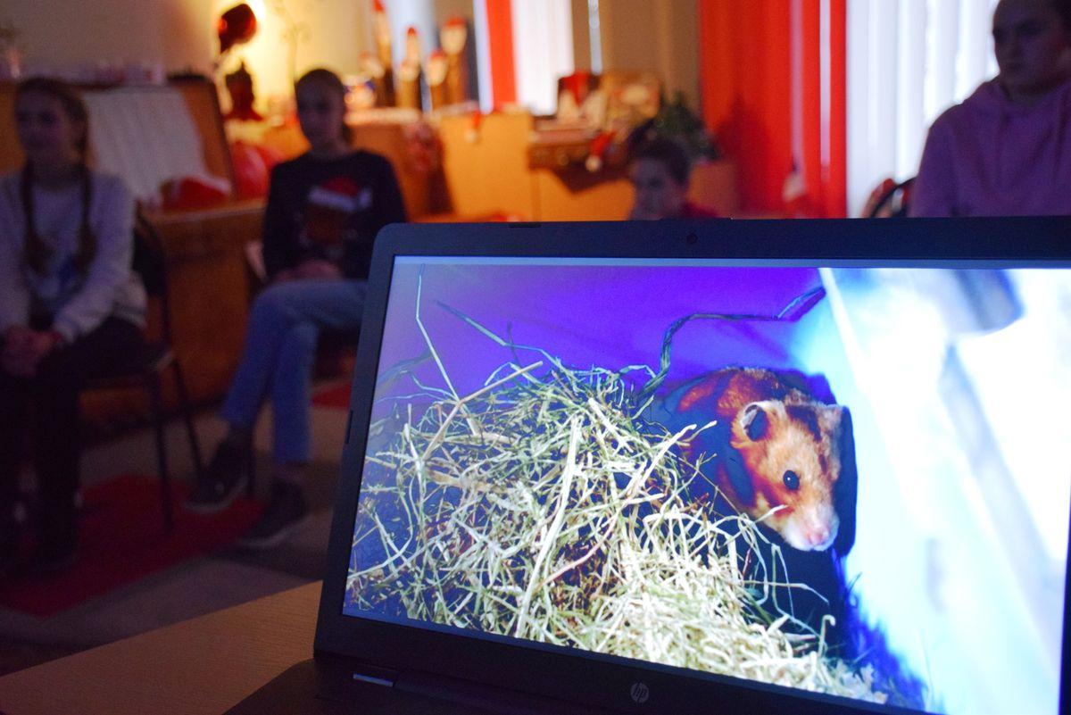 Просмотр немецкого фильма «Спасти Раффи». Фото: vk.com/tavlay_library