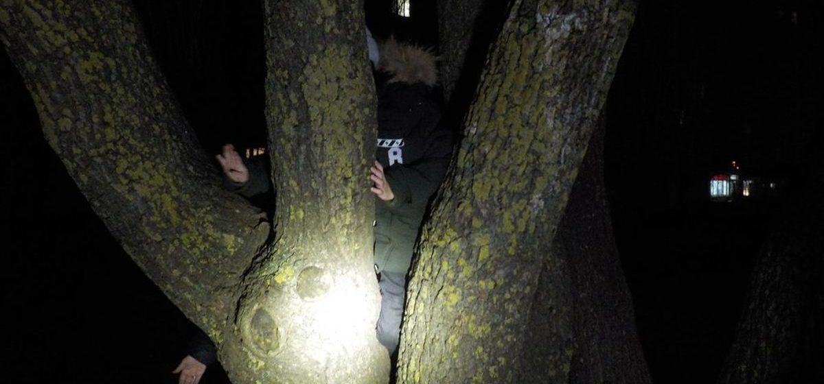 Мальчик в Бобруйске полез на дерево и застрял между стволами. Пришлось вызвать спасателей