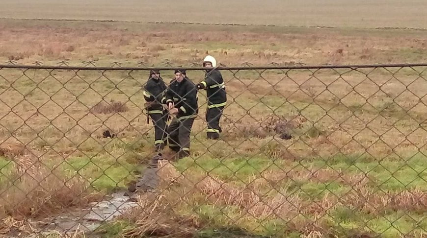 На Гродненщине спасли теленка и хозяина — они оба провалились в болото. Видео
