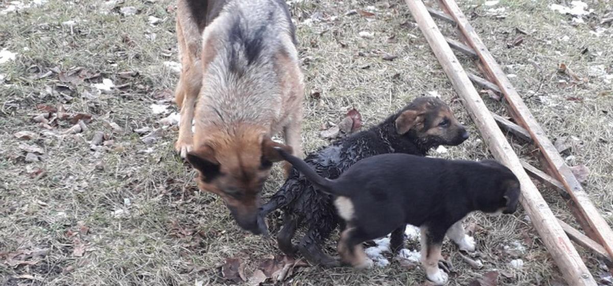 Барановичские спасатели помогли щенку выбраться из канализационного колодца