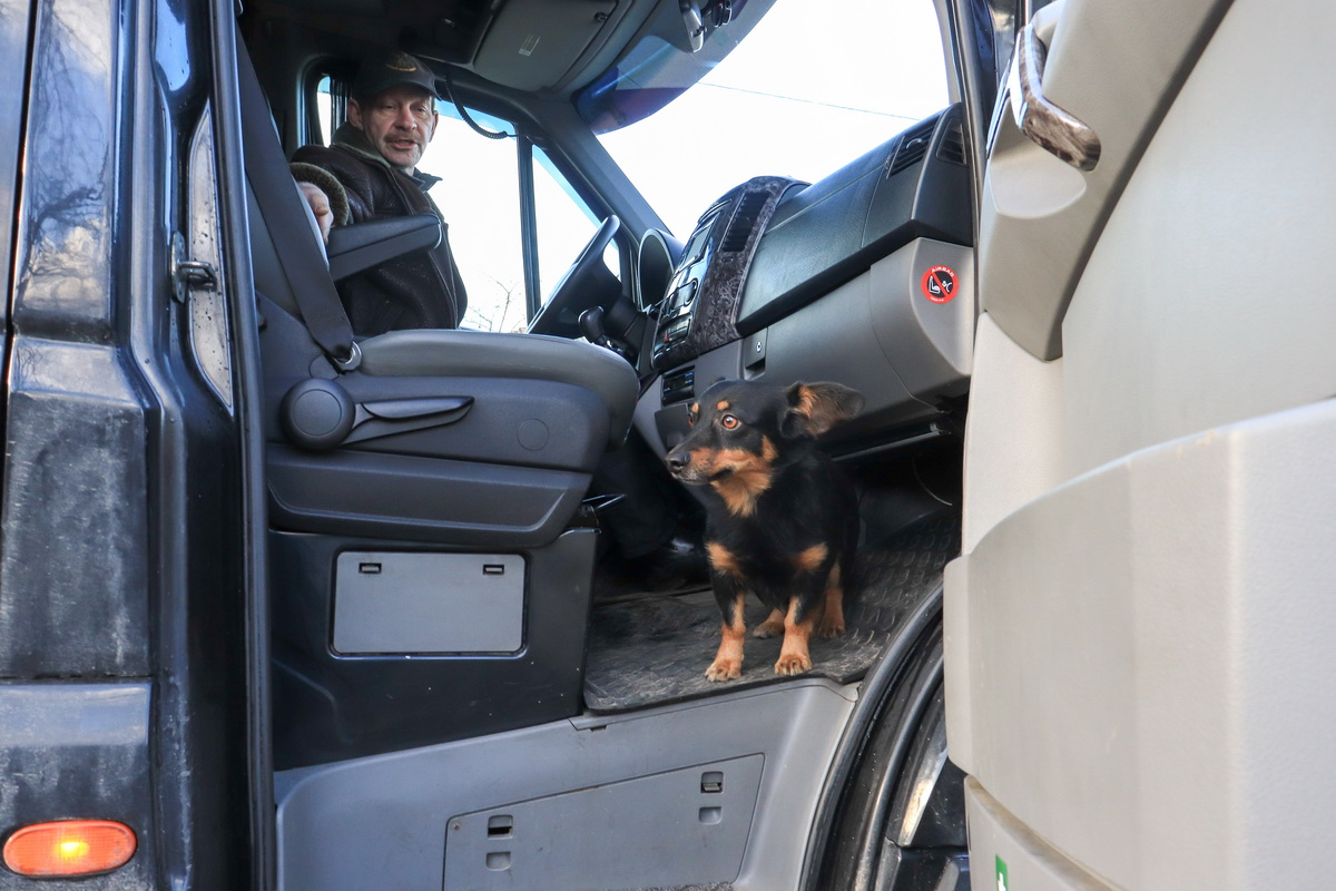 Пес  Мухтар сопровождает водителя маршрутки Игоря Бобко в каждой поездке. Фото: Андрей БОЛКО