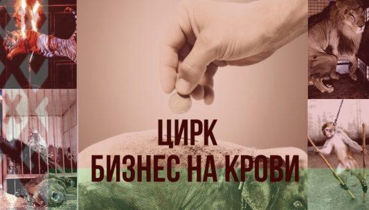 В Минприроды отреагировали на петицию о запрете использования диких животных в цирках Беларуси