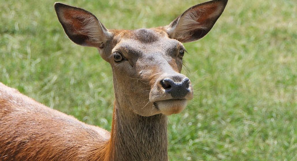 Барановичский лесхоз планирует провести учет диких животных. Как это происходит?