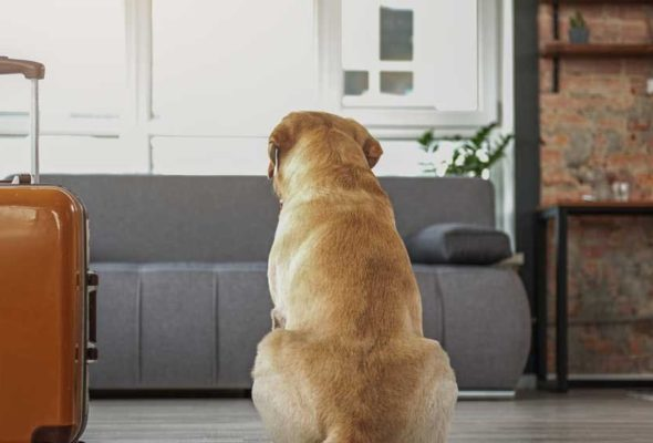 Качественная и быстрая перевозка мебели