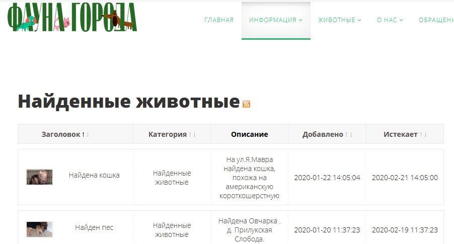 В Беларуси появился специальный интернет-сервис для поиска домашних животных