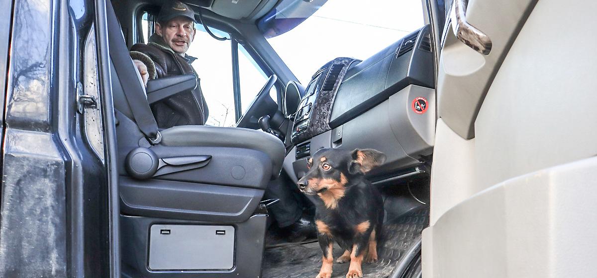 «Если собака легла, жди чего-то». Водитель маршрутки «Барановичи-Гродно» – о том, как его необычный напарник помогает в дороге
