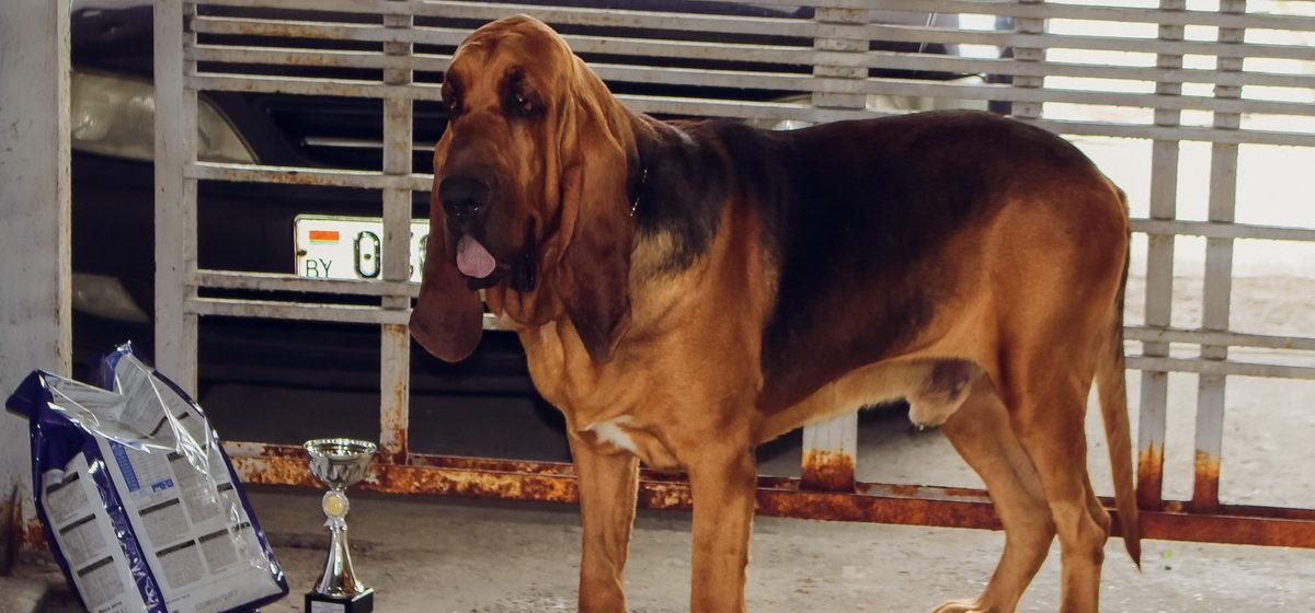 «Куда деть собаку, которая живет в семье семь лет?» Жильцов барановичского общежития попросили до конца месяца избавиться от питомцев