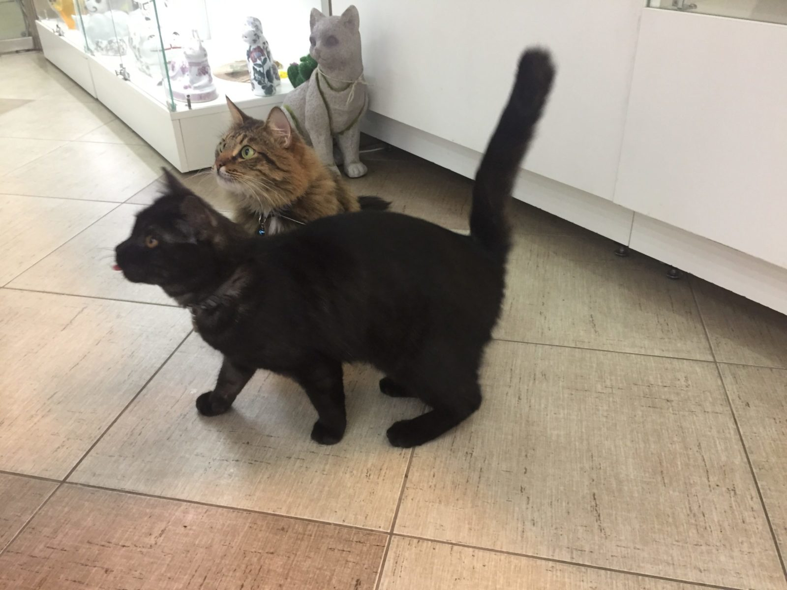 Черный кот Негро и серый кот Яша встречают посетителей галереи. Фото: Ирина КОМИК