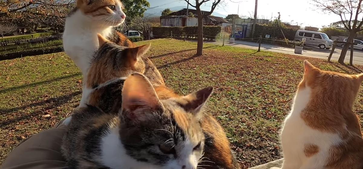 В японском парке мужчина решил погладить котенка, но что-то пошло не так. Видео