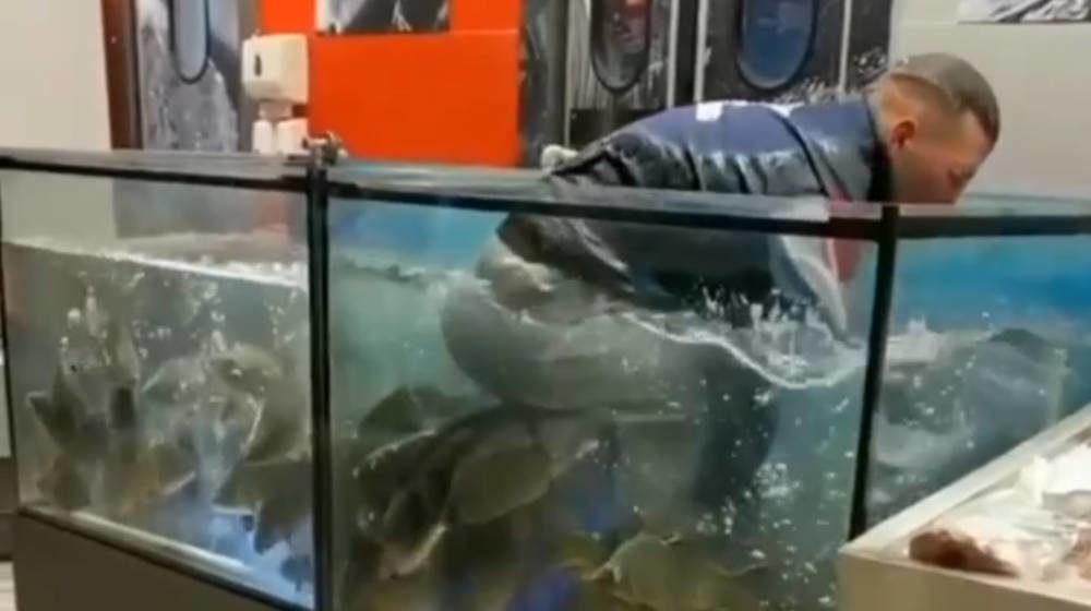 Парень забрался в аквариум гомельского магазина — искал там золотое кольцо