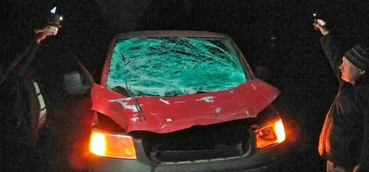Под Ивьем бус сбил 400-килограммового лося. Инцидент попал на видео