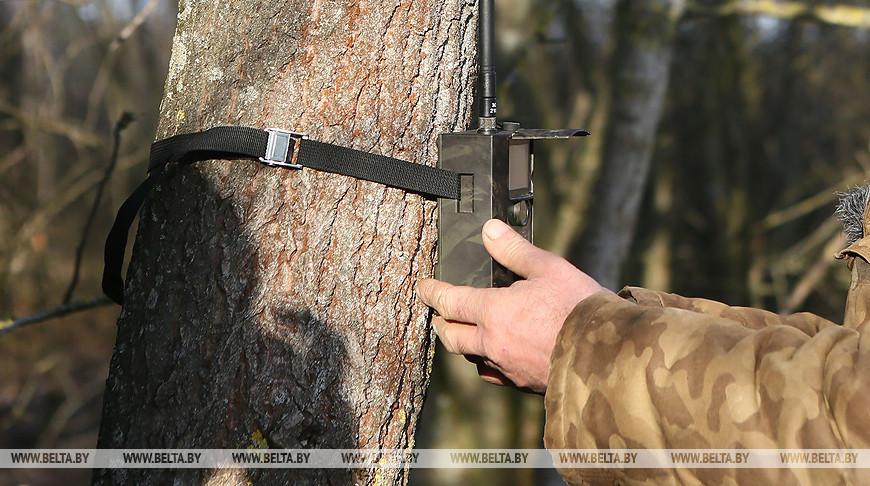 В Барановичском районе у лесхоза украли фотоловушку