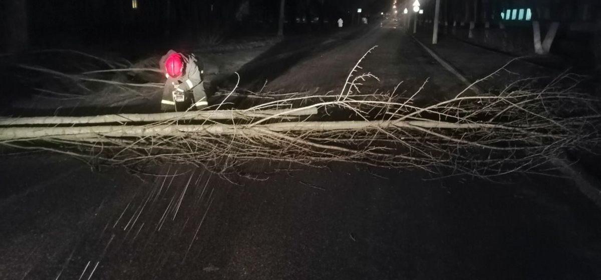 Сильный ветер повалил деревья и оставил без электричества 14 деревень в Барановичском районе