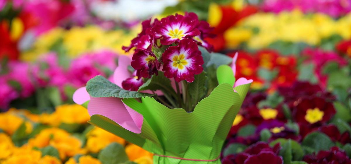 Кому тюльпаны, а кому пионы. Какие цветы дарить женщине по ее знаку Зодиака?