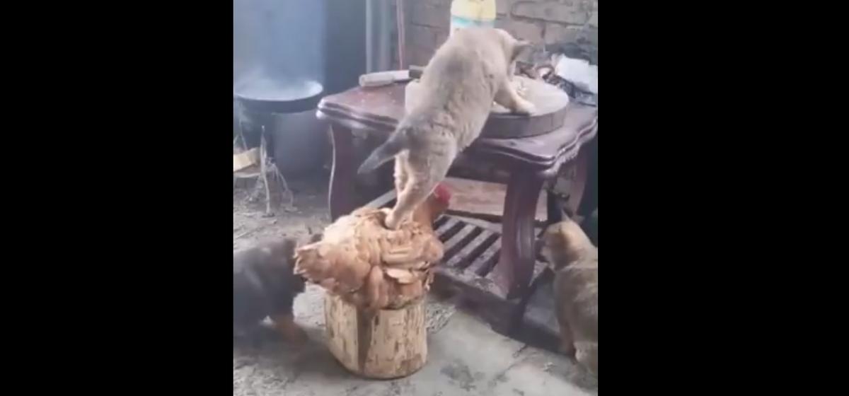 В Китае мужчина ненадолго оставил дома животных без присмотра, а когда вернулся, увидел необычную картину. Видеофакт