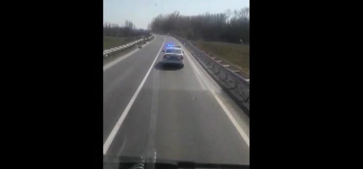 Коронавирус в Европе. Как сербская полиция сопровождает белорусского дальнобойщика. Видео