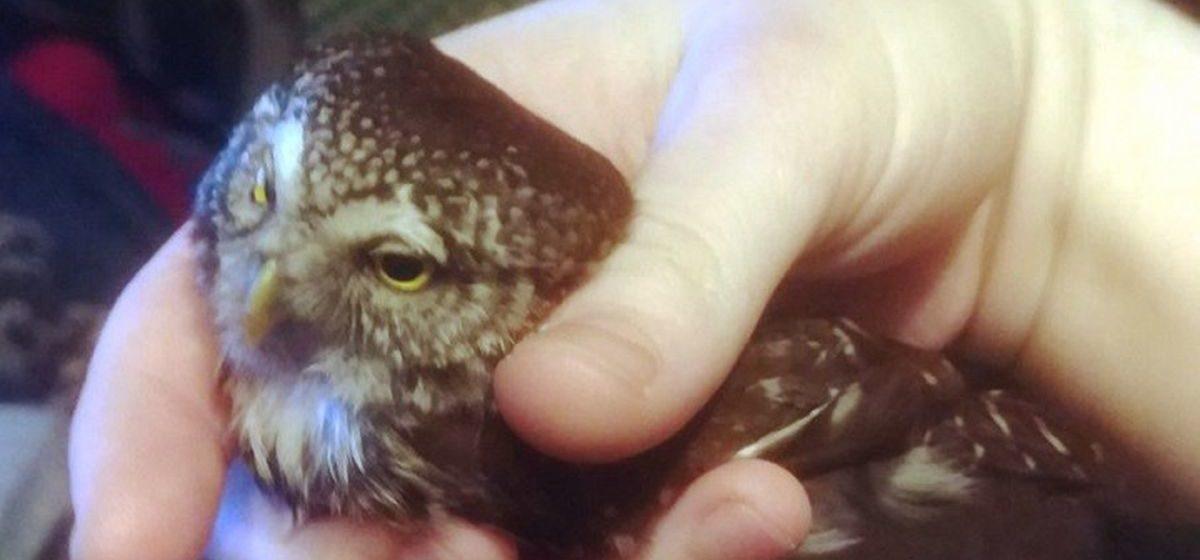 В квартиру брестчанина ночью залетела редкая птица, которую раньше в Бресте не встречали