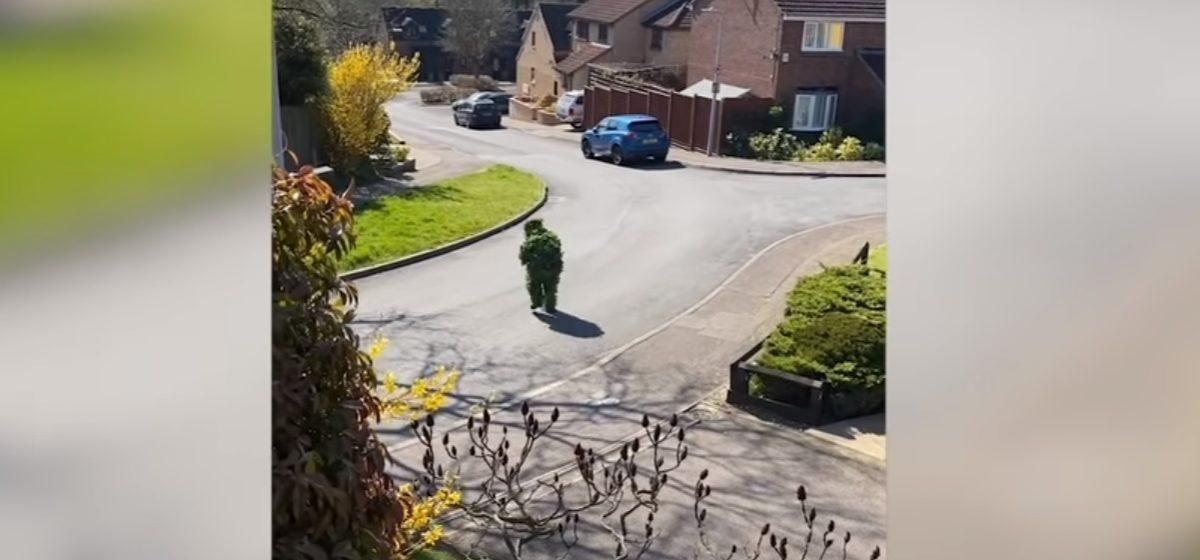 Британец переоделся в костюм куста, чтобы прогуляться по городу во время карантина. Видеофакт