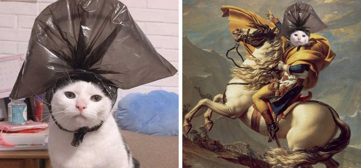 Хозяин ради смеха надел на терпеливого кота пакет и сделал его идеальной моделью для работ фотошоперов