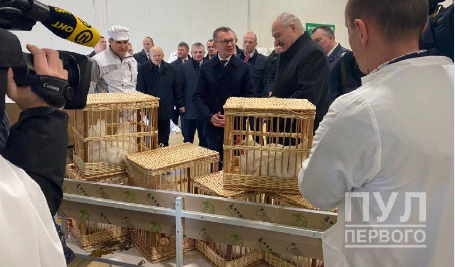 Лукашенко подарили петуха и четырех кур. Фотофакт
