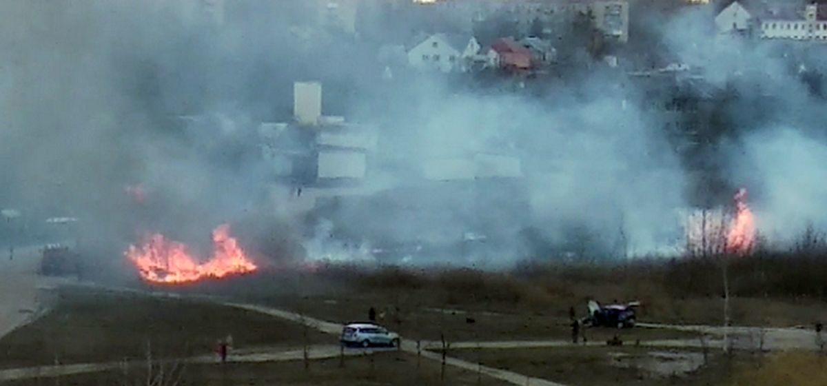 Как горела трава на Жлобинском озере в Барановичах. Видео