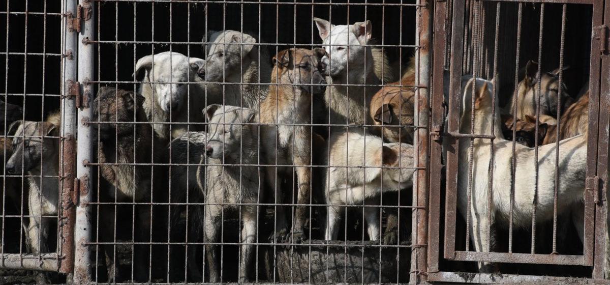 Китай исключил собак из списка животных, которых можно есть