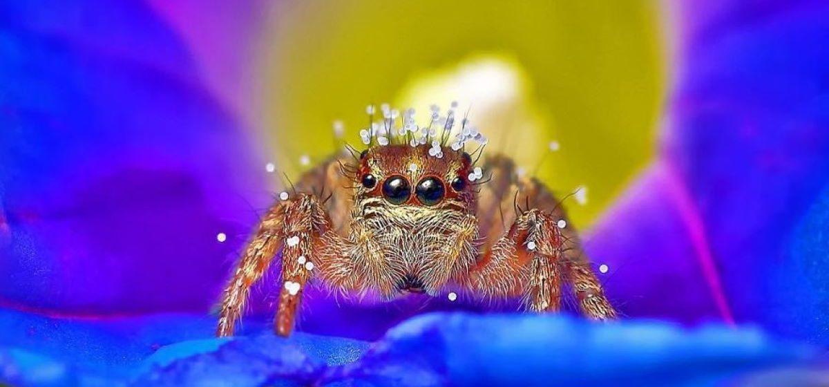 Боитесь пауков или змей? Вы точно измените свое мнение, увидев эти снимки