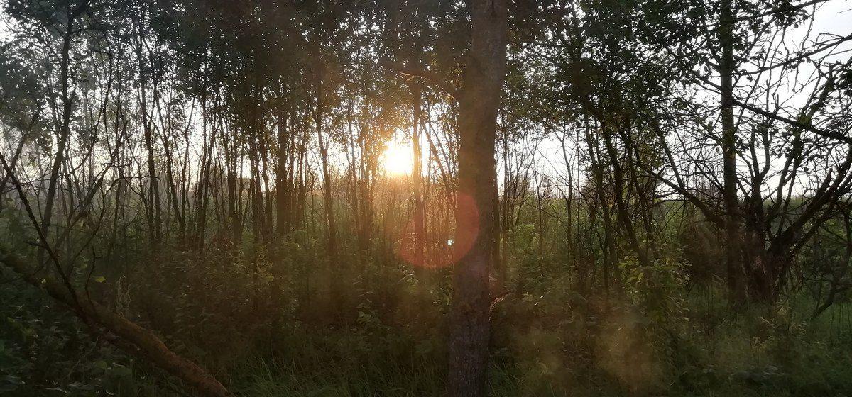 В Барановичском регионе запретили посещать лес
