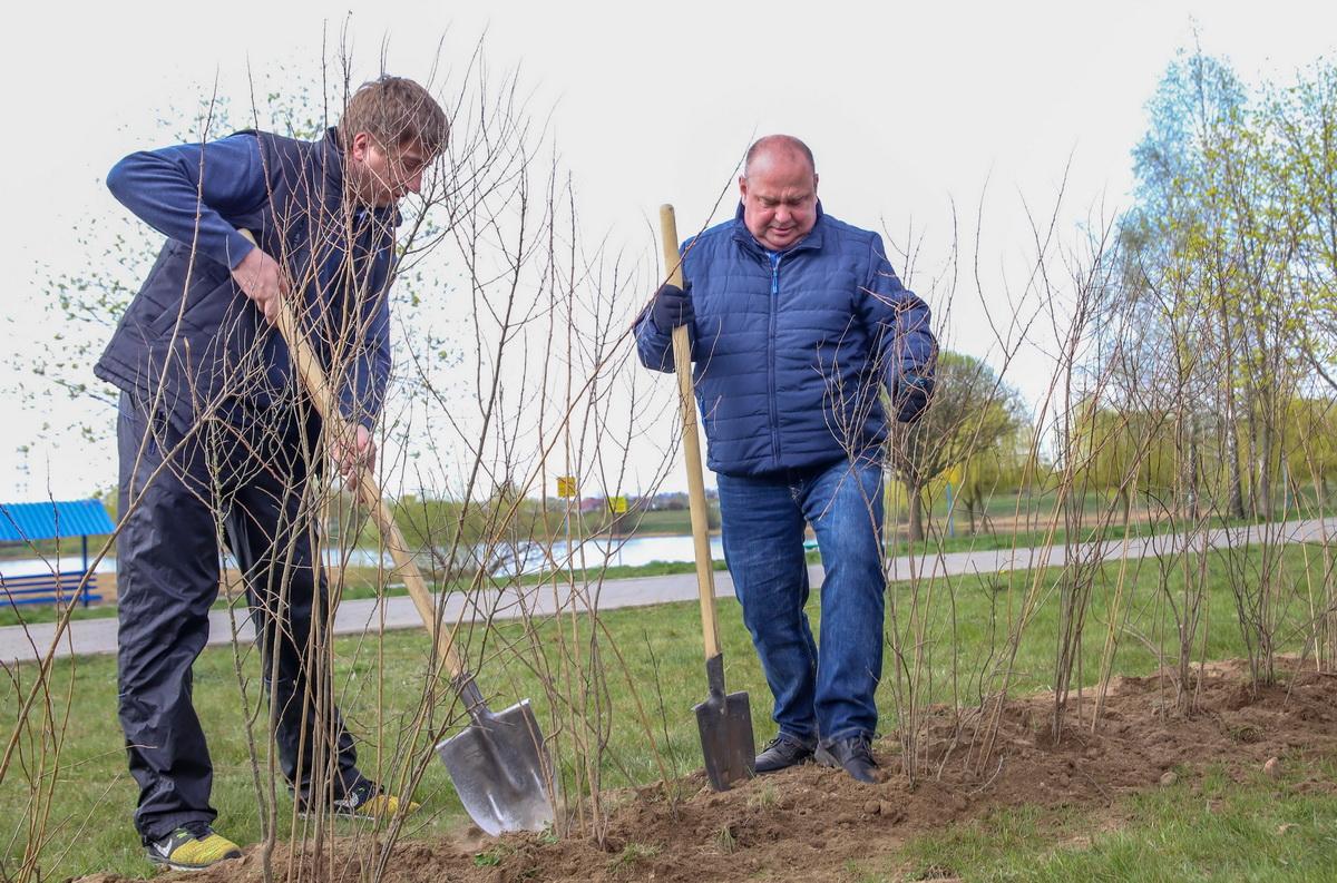 Председатель Барановичского горисполкома Юрий Громаковский (справа) на субботнике. Фото: Андрей БОЛКО