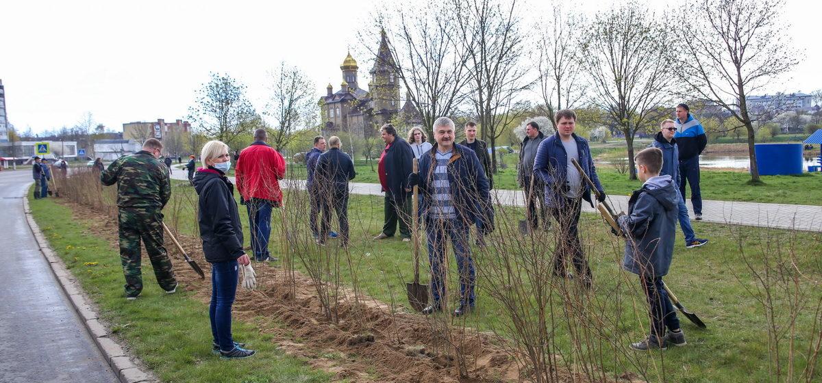 Городской субботник и единый день озеленения пройдут в Барановичах