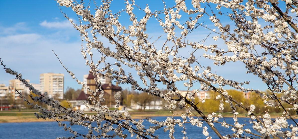 Отвлекитесь от мыслей о коронавирусе и посмотрите, как расцветают Барановичи. Фоторепортаж