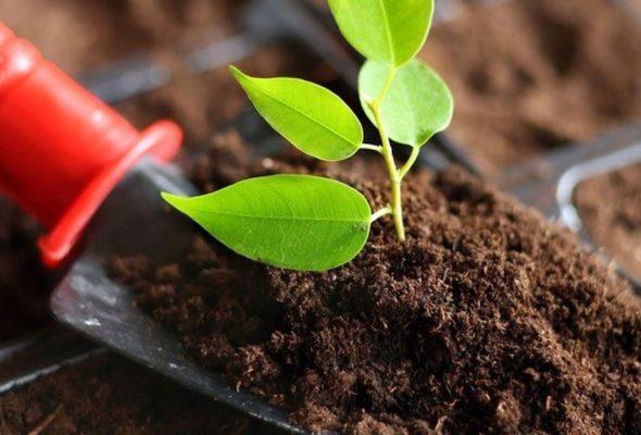 Качественные семена комнатных растений