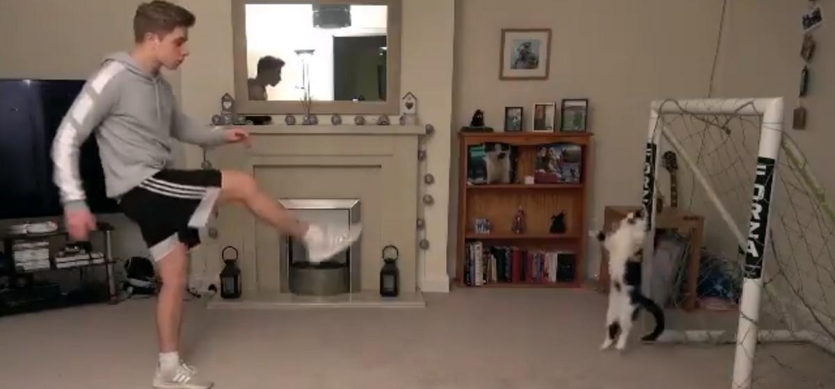 Видео с котом-вратарем, не пропускающим ни одного мяча, набрало 11,3 млн просмотров. Зацените сами