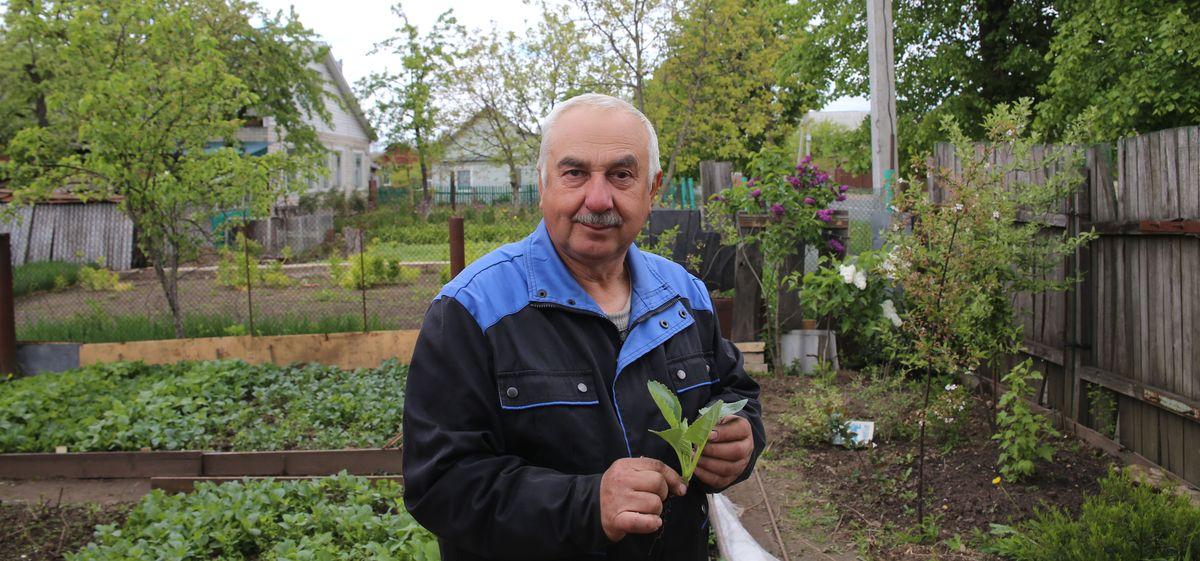 Капуста: как выбрать рассаду и какие ошибки при выращивании допускают огородники. Видео
