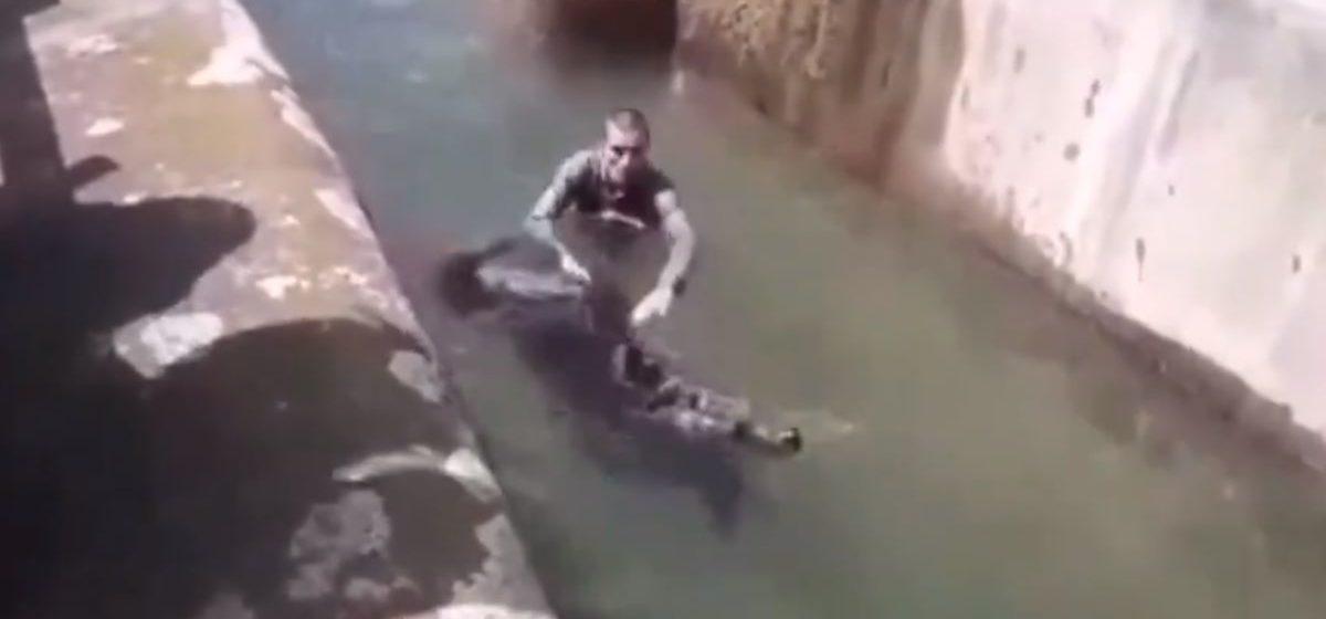 Пьяный поляк в зоопарке залез в вольер к медведю, которому это не понравилось. Видеофакт