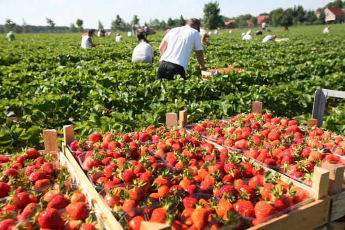 Польша смягчила карантин для сезонных работников из Беларуси