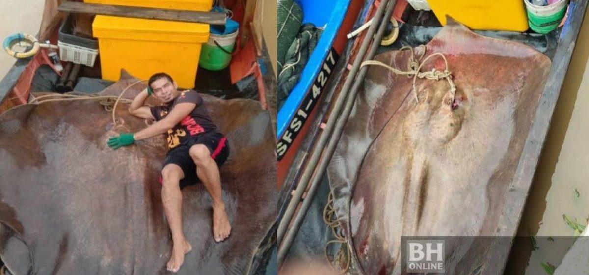 Из реки в Малайзии рыбаки вытащили четырехметровую рыбу весом 280 килограммов