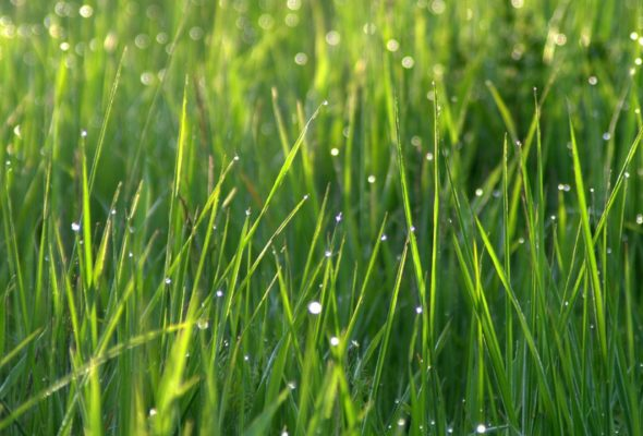 Ваш газон будет выглядеть идеально