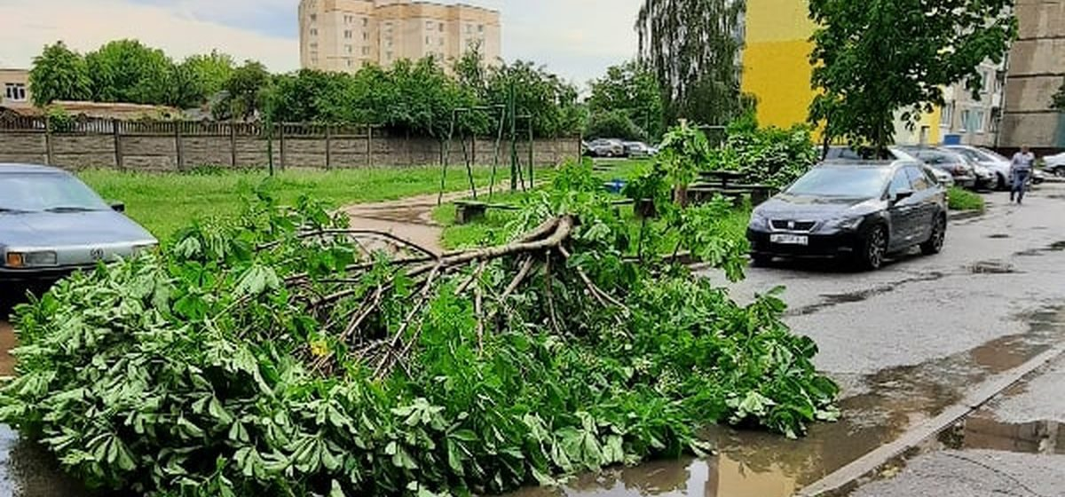 Упавшие деревья и обесточенные деревни. Как пострадал Барановичский регион из-за непогоды.