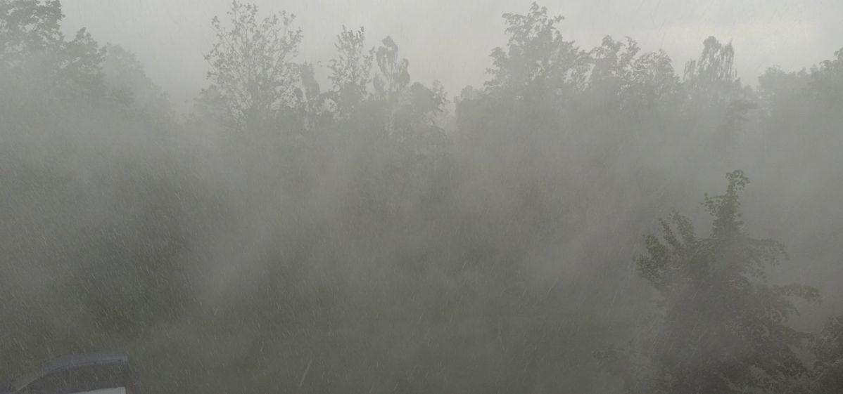 Ливень и порывы ветра, раскачивающие деревья, Южный микрорайон. Фото: Алексей СЕМАКОВИЧ