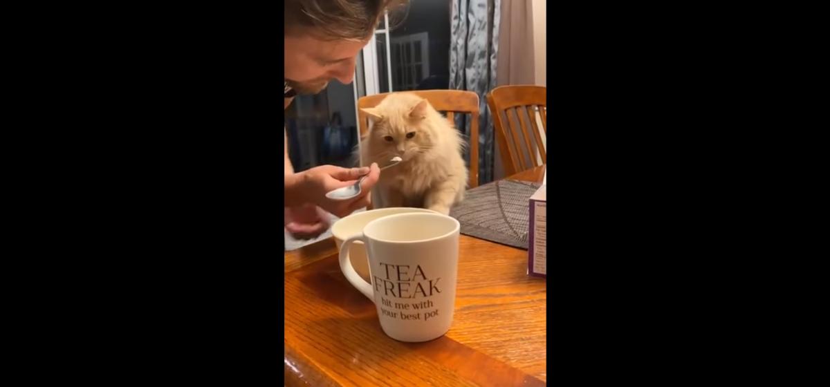 Удивительная реакция кота, которому впервые дали мороженое. Видео