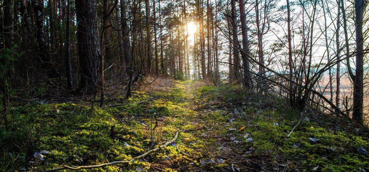 Ждать ли жары в начале лета в Барановичах? Прогноз погоды на 2-4 июня