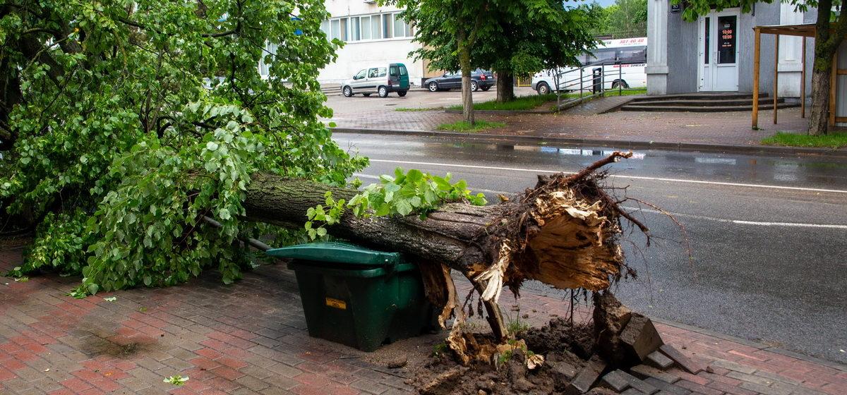 Новости. Главное за 9 июня: ДТП с участием байкера, предъявленное обвинение блогеру и сломанные ураганом деревья в центре города