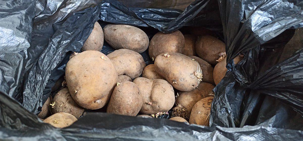 Девушка оставила картошку на три месяца в квартире. Посмотрите, что из этого вышло
