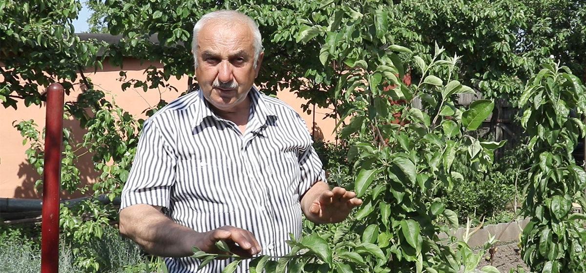 Зачем на ветках плодовых деревьев развешивать гайки? Видео